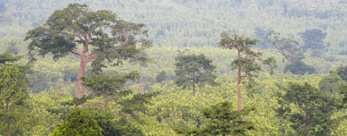 Scaling up sustainable forestry projects key to attracting finance