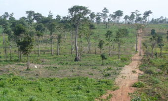SUB: The transformation of a degraded forest area in the Tain II Forest Reserve, Ghana, between 2014 and 2018. ©FORM International