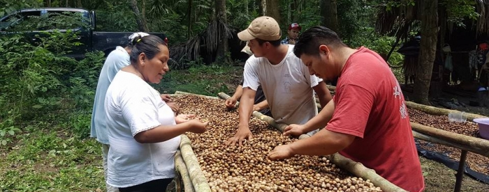 Financial products should be adjusted to better meet needs of community forest enterprises