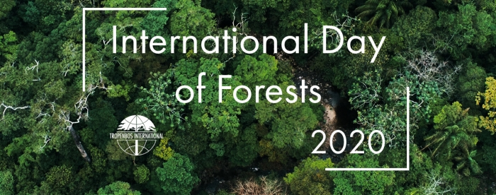 The role of forests at the turn of the decade: in conversation with René Boot